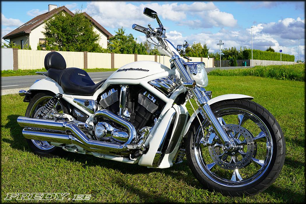 '03 Harley-Davidson VRSCA V-Rod 12