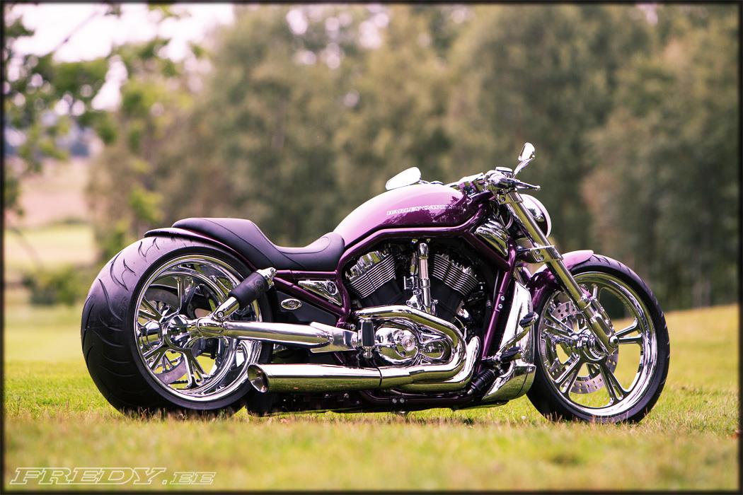 Vrod For Sale >> '02 Harley-Davidson VRSCA V-Rod 3   Fredy.ee